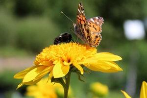 Pollinator Plant Walk @ Rolling Green Nursery