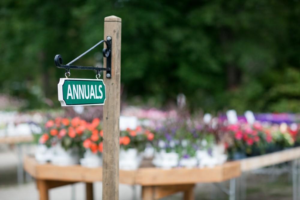 Annual Plants Seacoast NH