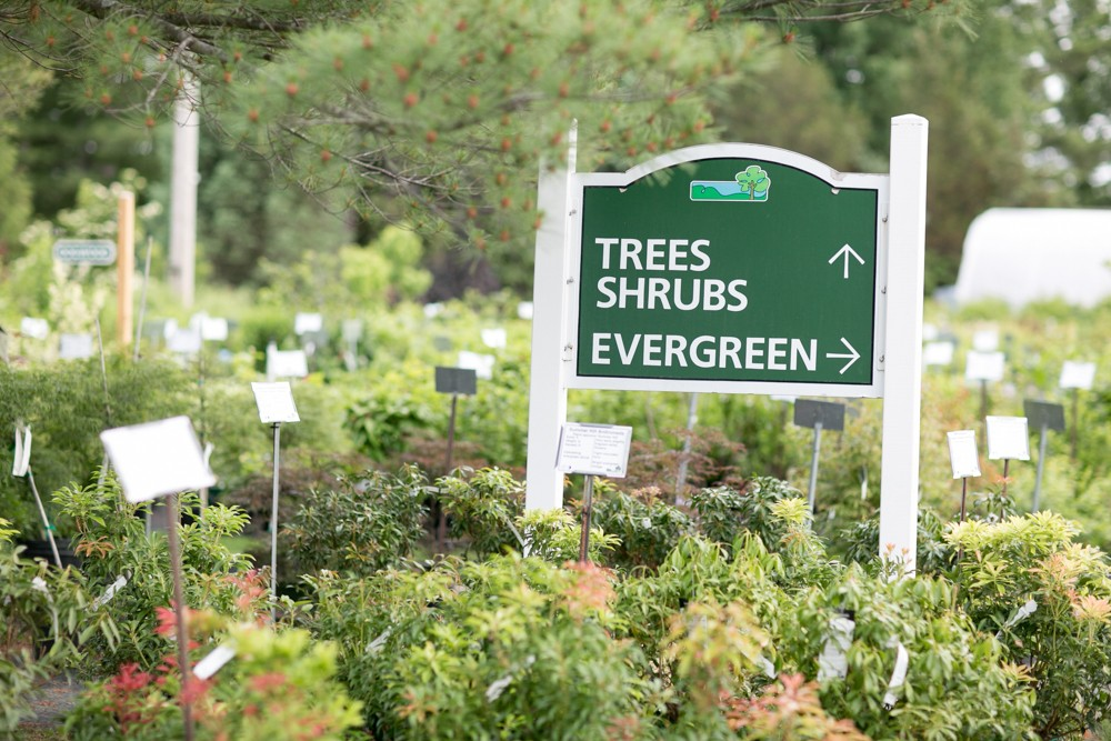 Trees and Shrubs Seacoast NH