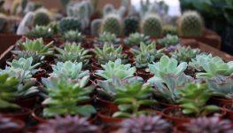 succulent success - what's the secret?