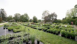 perennials @ rolling green nursery